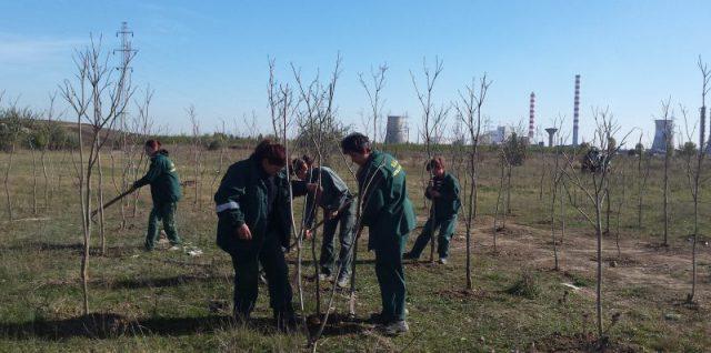 plantam viitor verde