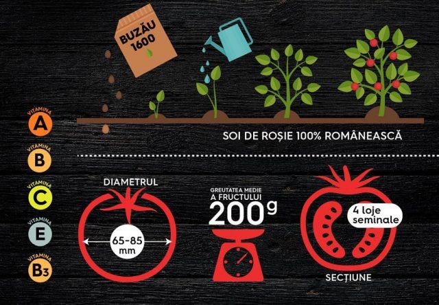 Lidl Rosia Buzau1600