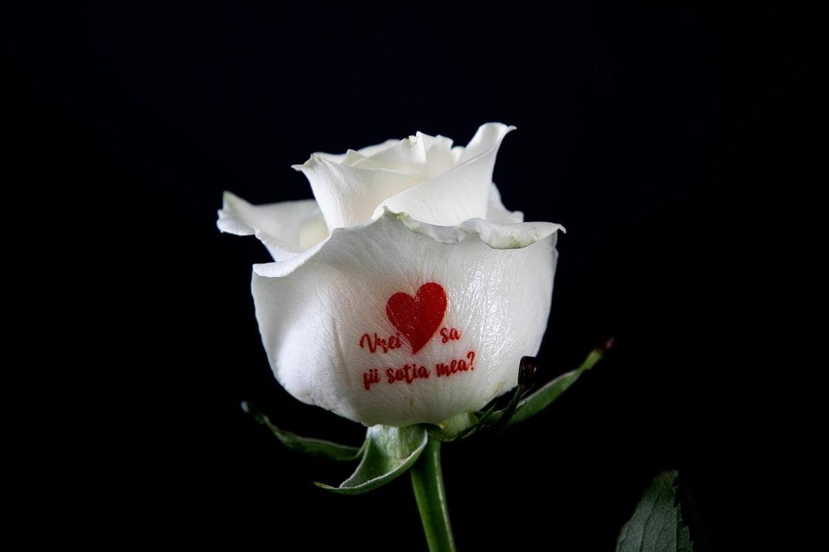 FlorideLux Trandafiri care vorbesc